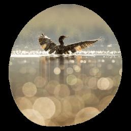 Horaire - Crépuscule étang de pêche - canard sur l'eau