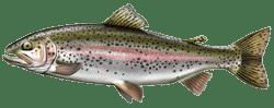 truite aec les differentes especes de poissons dans le nord