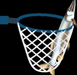pêche brochet dans un filet